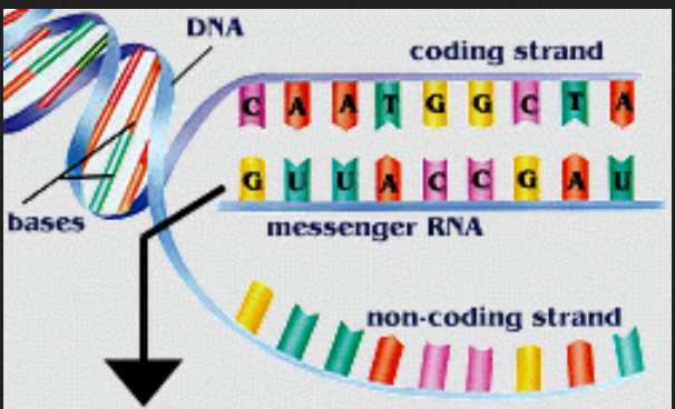 messenger RNA railorad leopold & loeb